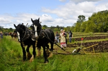 HorsesPloughing
